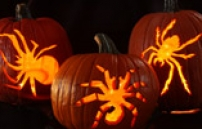 Halloween Activities and Events in New Jersey and Beyond
