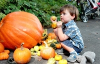 Pumpkin Picking and Harvest Fests in New Jersey, Bergen County