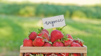 Strawberry Festivals, Berry Picking and Farm Fun Near Bergen County NJ