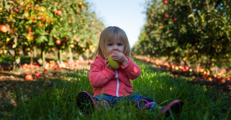 Best Spots for Apple Picking in New Jersey and Beyond