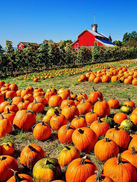 Pumpkin patch paramus nj restaurants